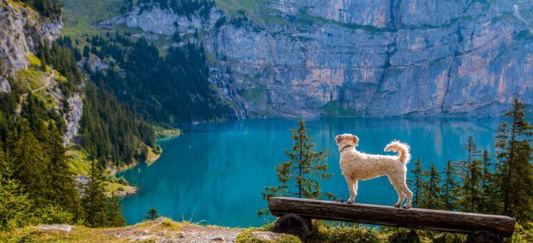 Tager du din hund på ferie? Her er 3 tips